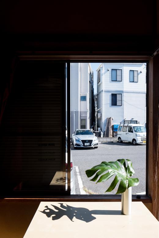 tatami-pflanze